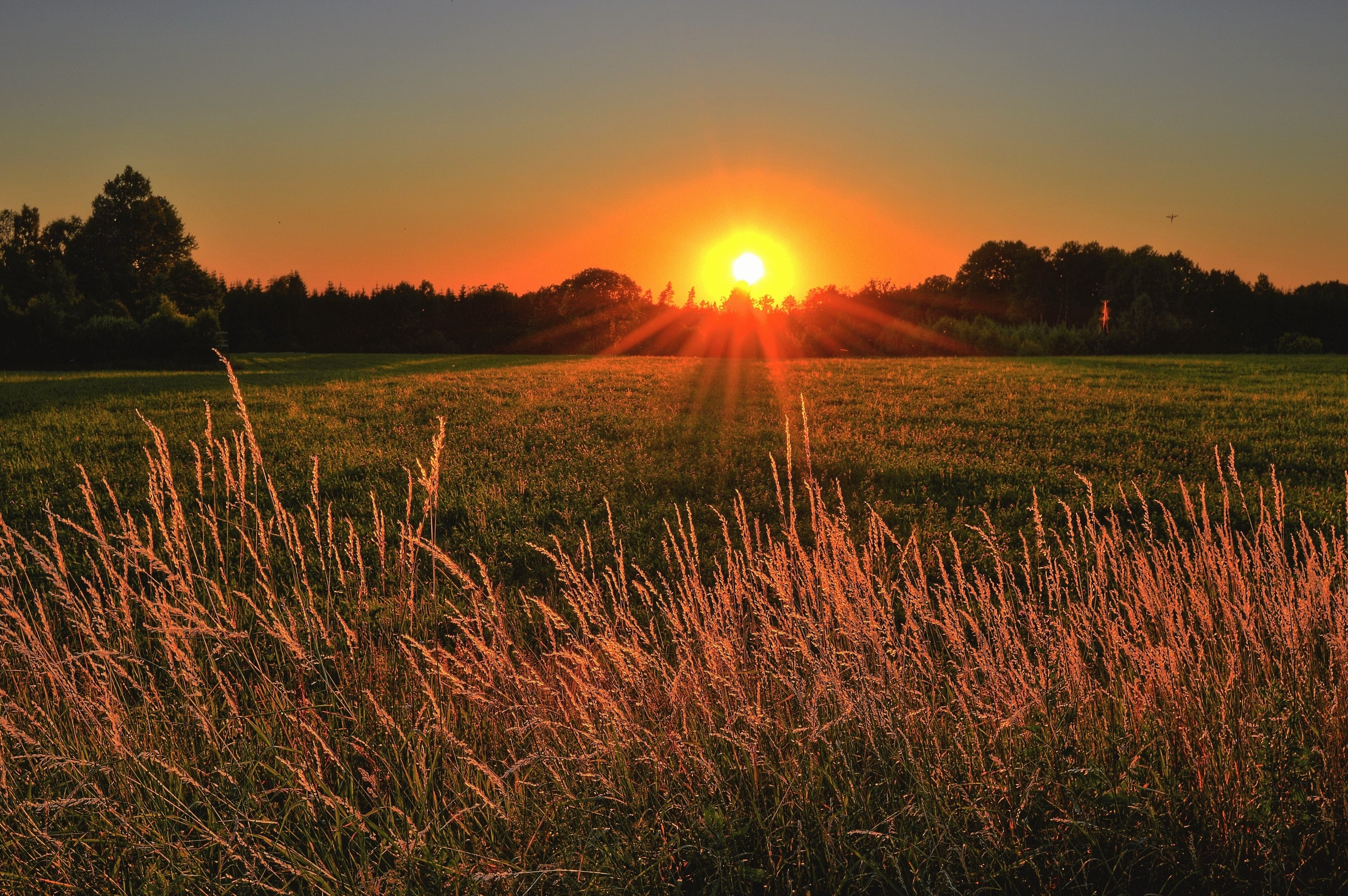 brown-and-green-grass-field-during-sunset-1237119